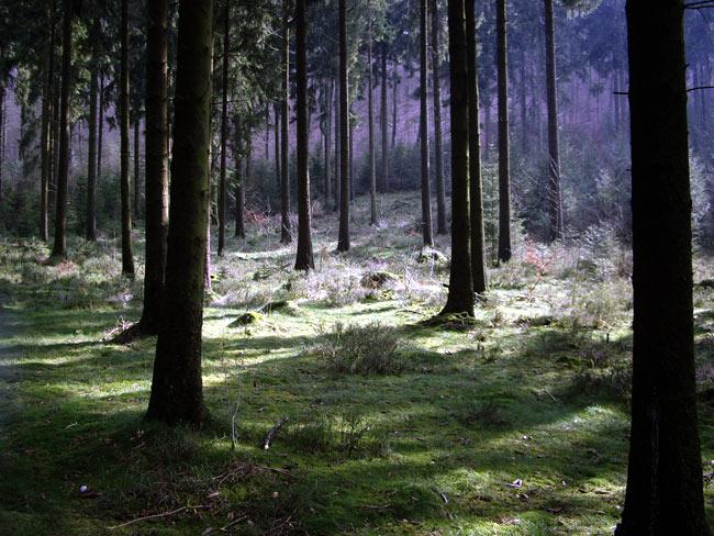 Wald / Foto: minimlwork