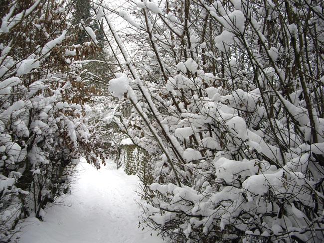 Winter in Bielefeld