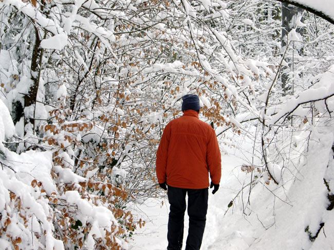 Winter im Teutoburger Wald