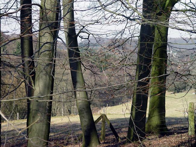 Frühling im Teutoburger Wald