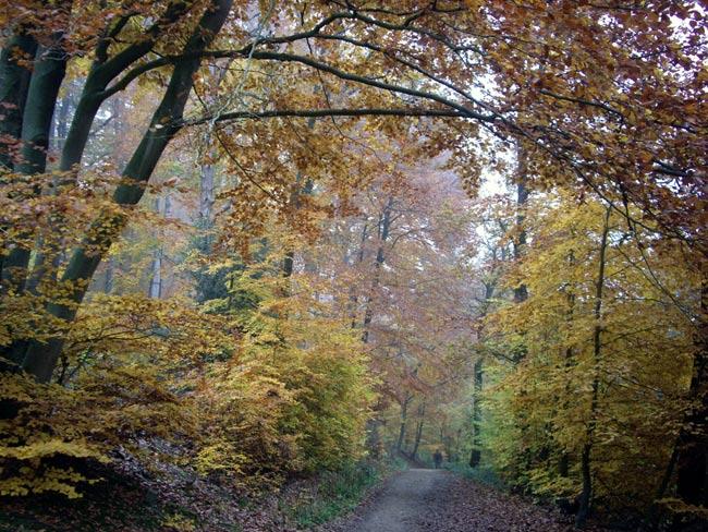 November in Bielefeld II