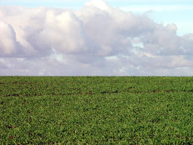Wiese und Wolken / Foto:minimlwork