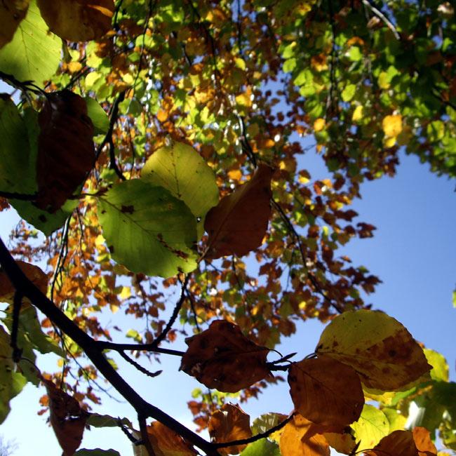 Herbstwald III / Foto: minimlwork
