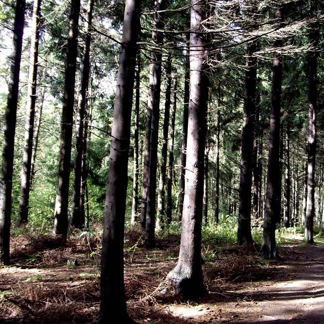 Herbstwald / Foto:minimlwork