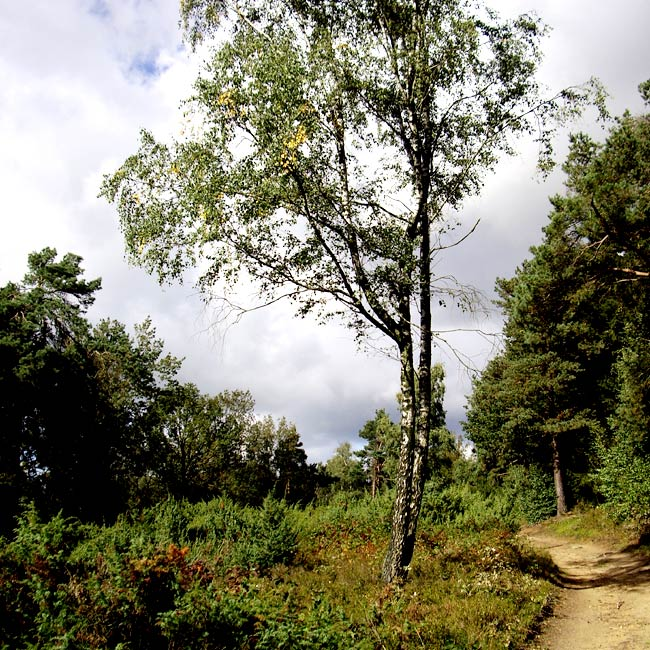 Herbstwald II / Foto:minimlwork