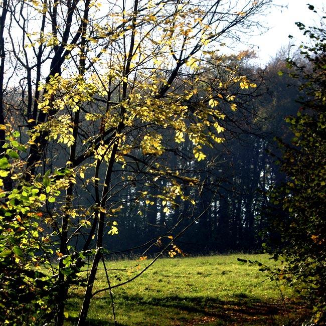 Wald und Wiese / Foto: minimlwork